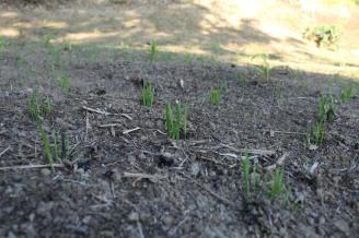 Plants slowly growing